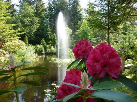 Kitty Coleman Woodland Gardens