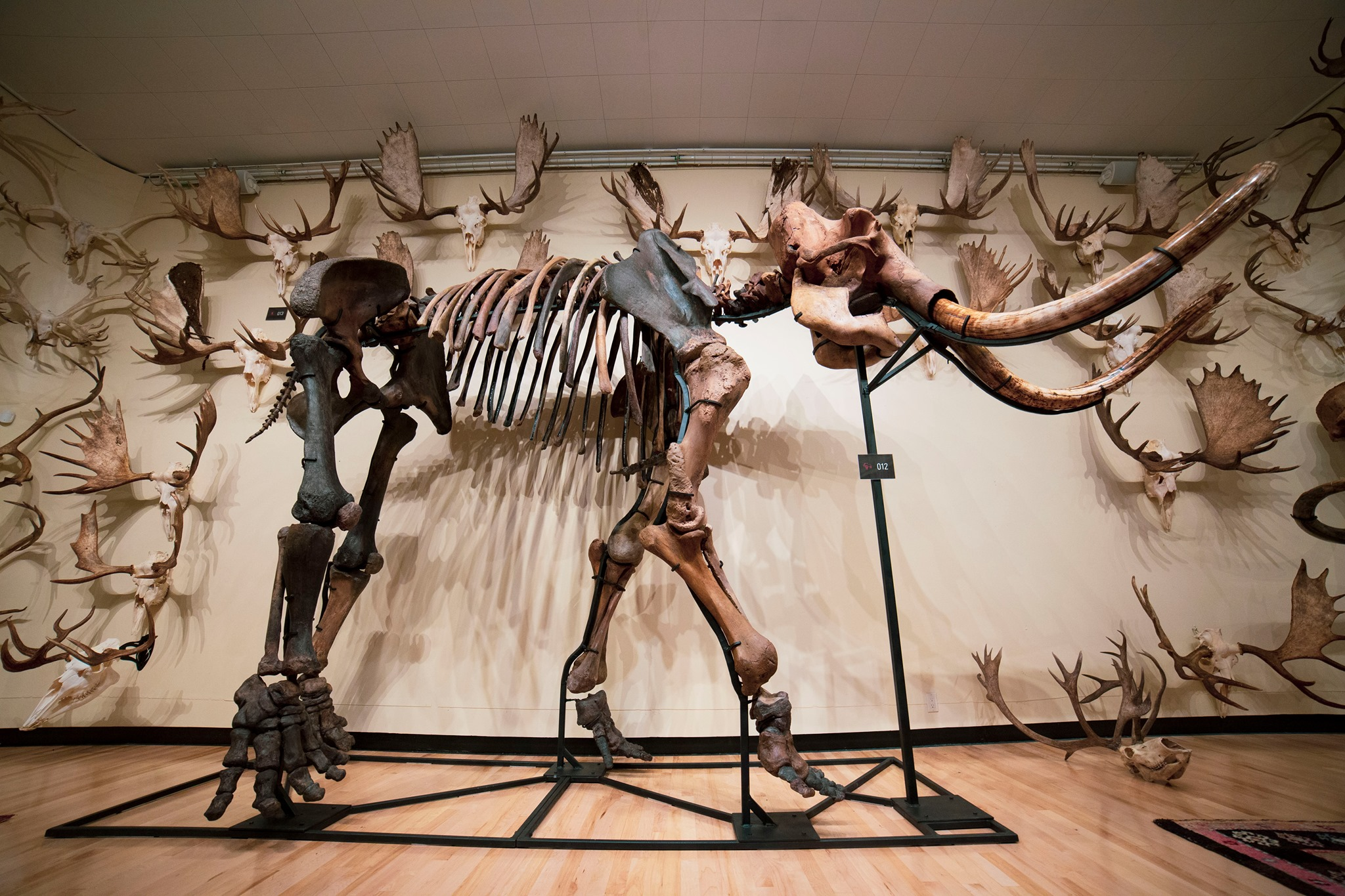 Hand of Man – Museum of Natural History, Cultural Arts & Conservation