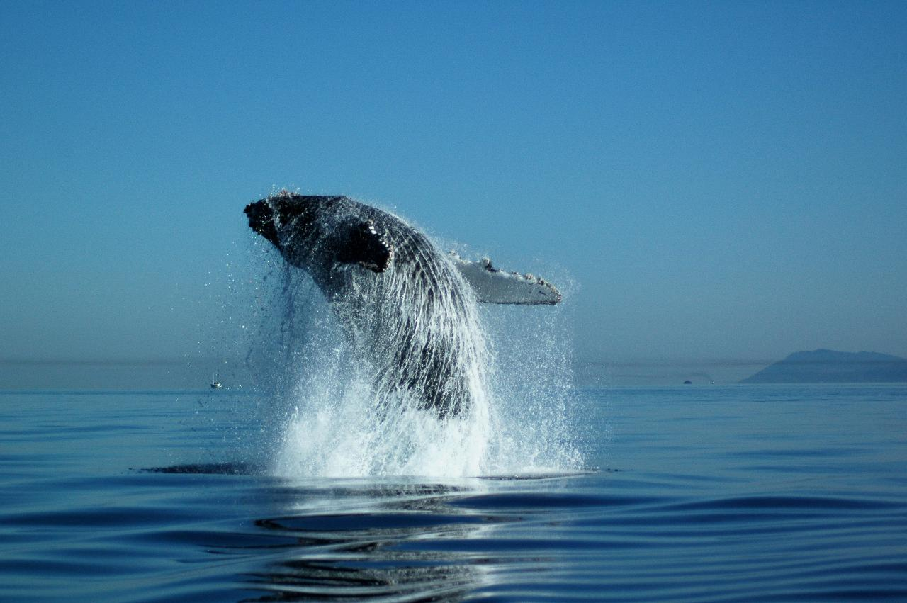Whale Watching Ocean Ecoventures
